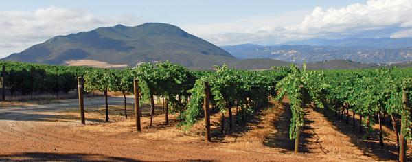 Lake County vineyard near Mount Konoct
