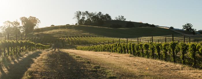 Capay Valley Vineyards