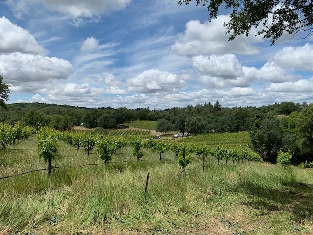yorba wine vineyard
