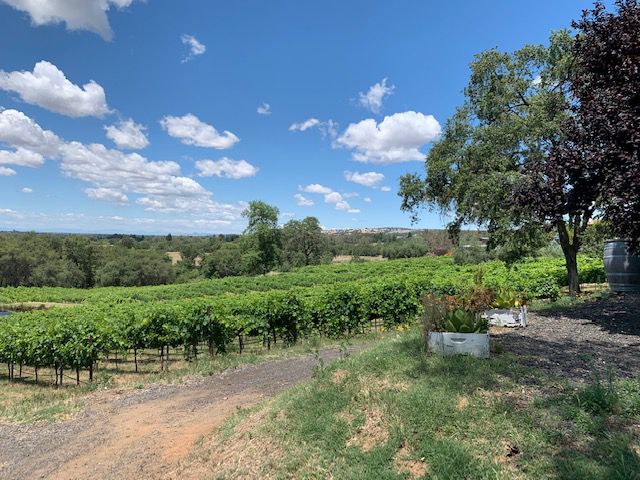 paza estate winery vineyard