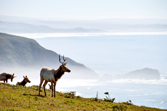 tomales point trail hike