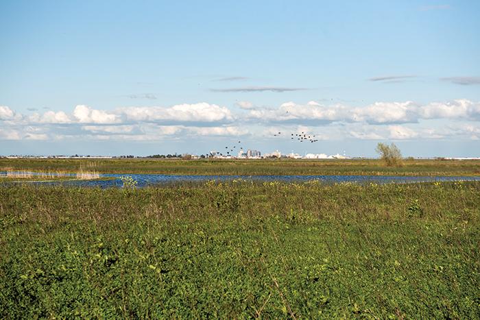 Yolo Basin Wildlife Area